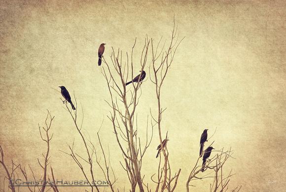 Birds in the Tree II