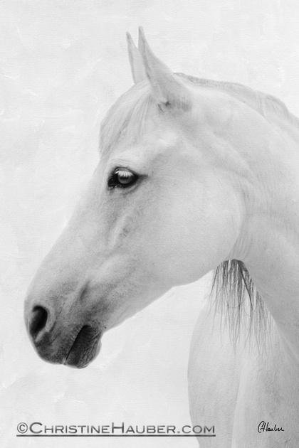Ivory Spirit White