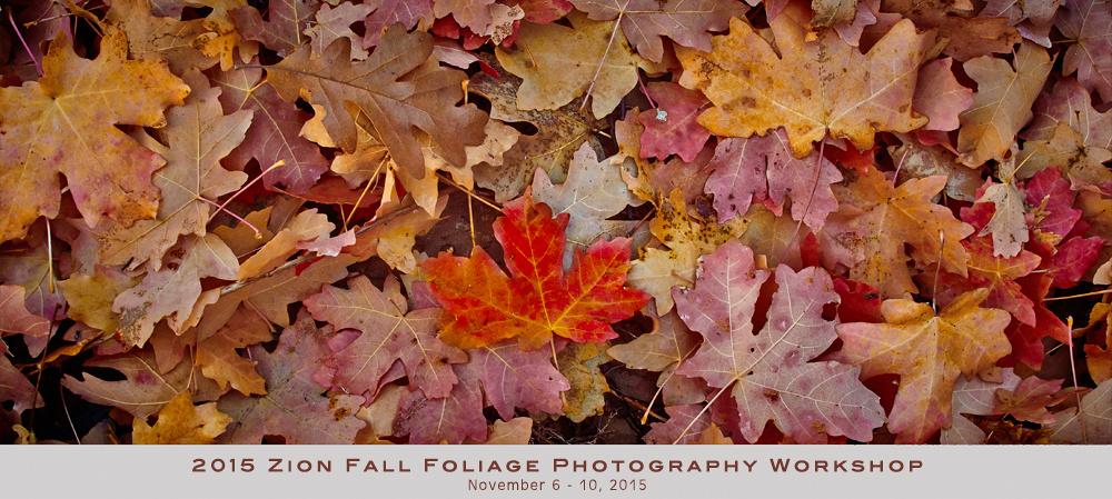 2015 Zion Fall Foliage Photography Workshop