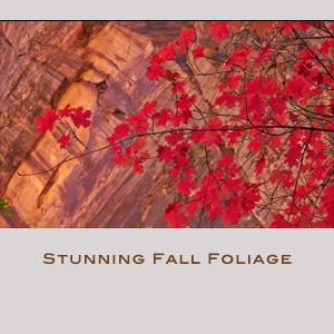 Stunning Fall Foliage