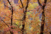 Zion Fall Foliage