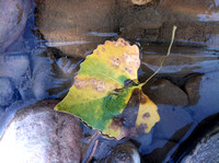 Leaf on ice in Zion National Park