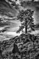 Crested Butte Tree II
