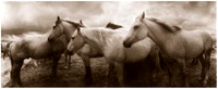 three-horses-facing-east1-590x241